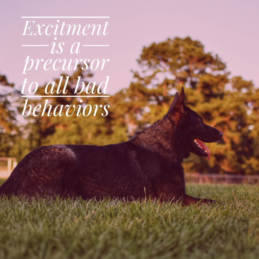 Excitement is a precursor to all bad behaviors.
